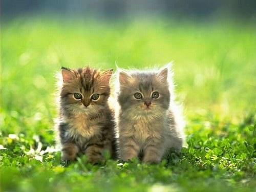 Une sécurité sociale pour chat : est vraiment nécessaire ?