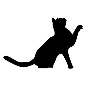 Evolution du marché des assurances pour chats