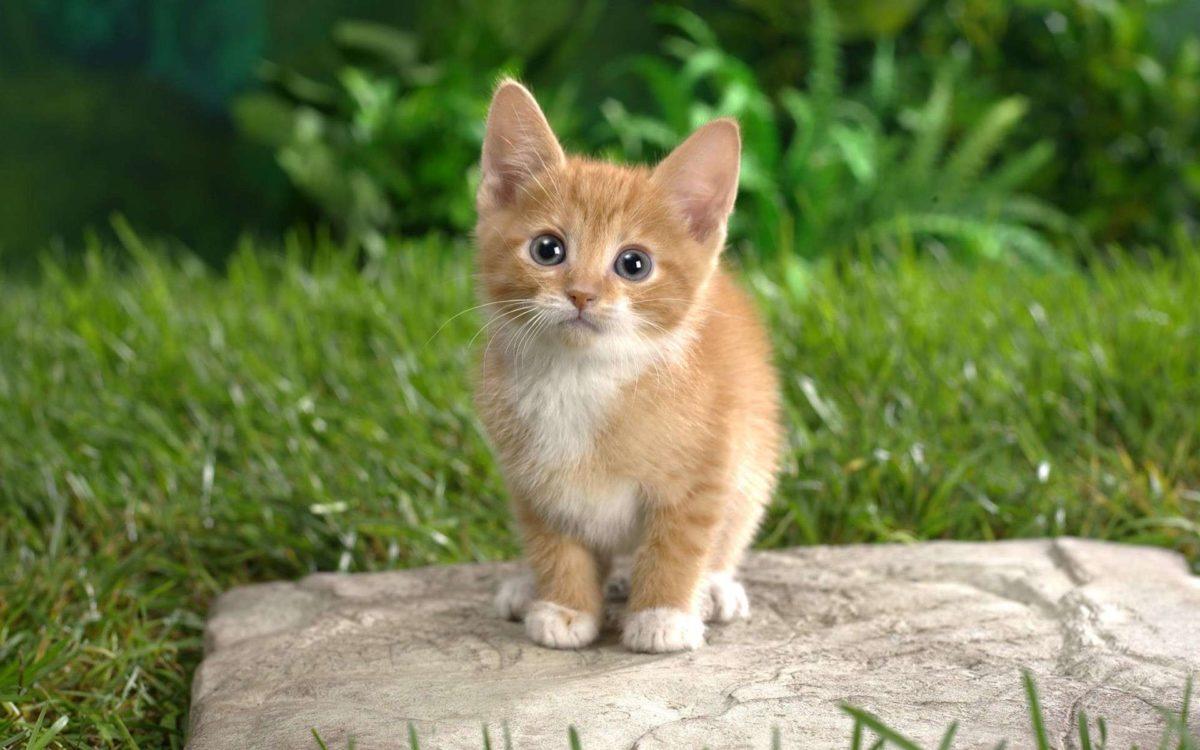 Zoom sur les assurances pour chats de compagnie