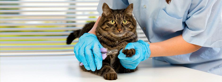 Chronique sur les assurances ou mutuelles pour chats